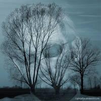 Trees Philo-Sophy by MarioDellagiovanna