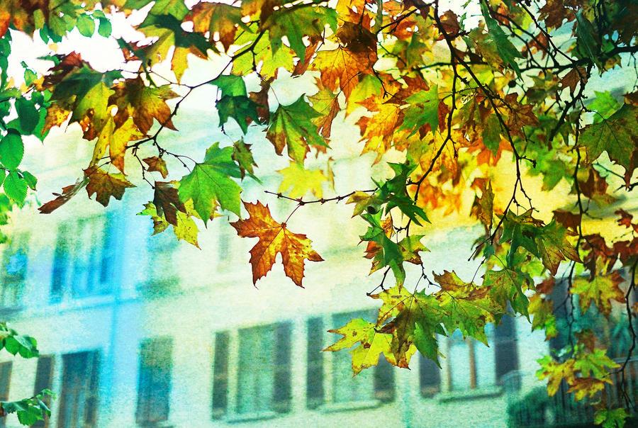 Autumn leaves by MarioDellagiovanna