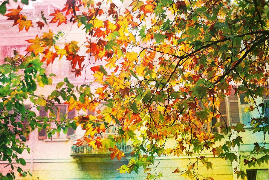 like Autumn Leaves by MarioDellagiovanna