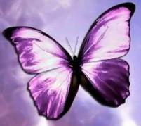 Buterfly by PheinoxTonks