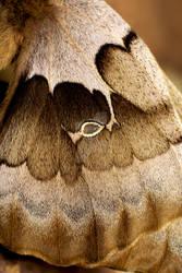 Moth Wing Detail