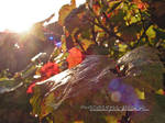 Autumn Rain 2.