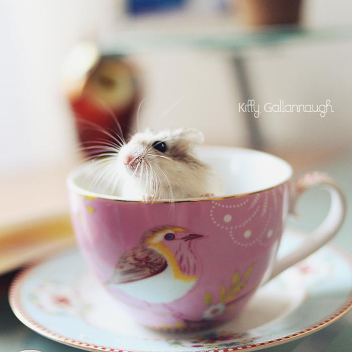 najromanticnija soljica za kafu...caj - Page 3 843677931532eaa32fe1af2eea411c8c-d3br91e