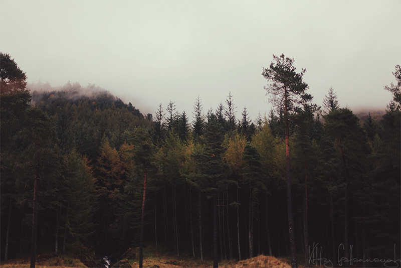mountain_forest_by_kittysyellowjacket-d5