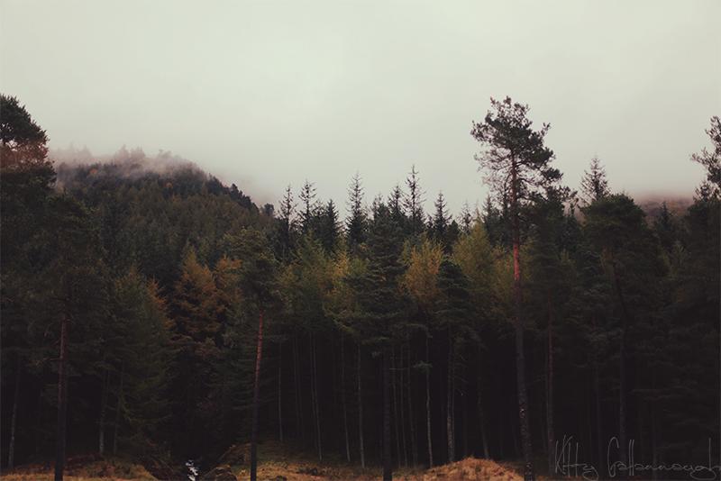 Mountain Forest By Kittysyellowjacket