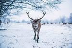 Deer friend.