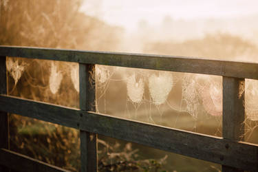 Morning webs. by kittysyellowjacket