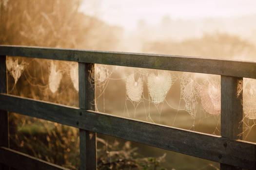 Morning webs.