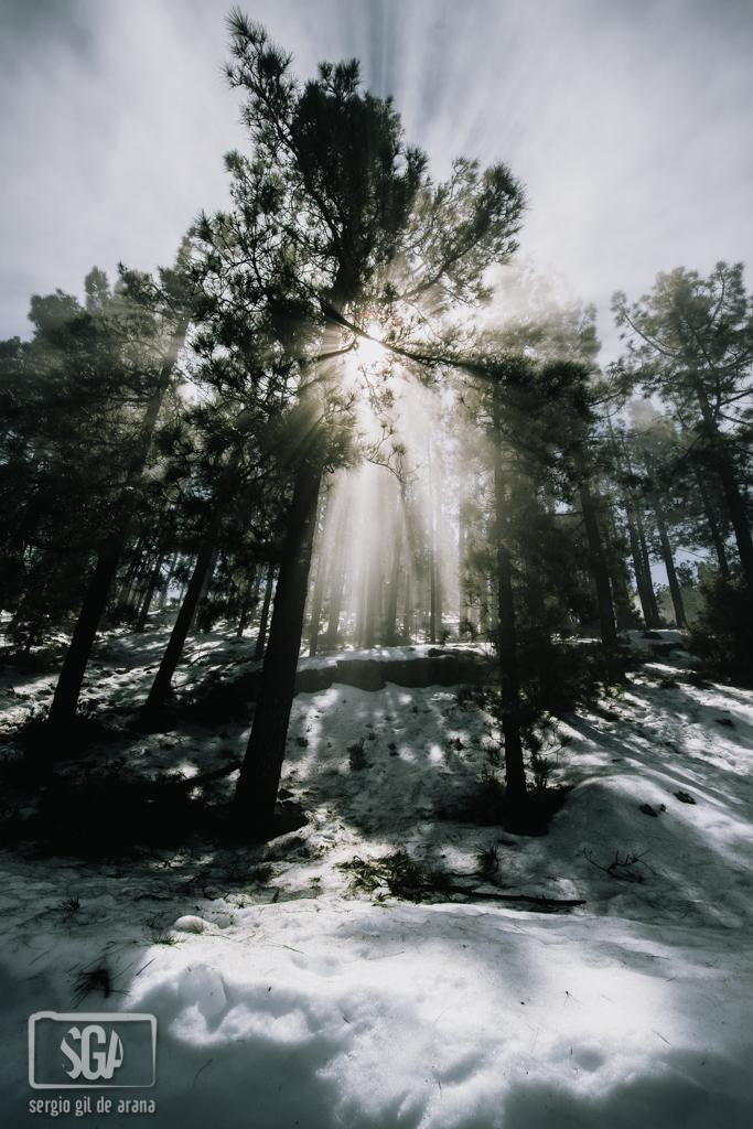 Sunlight by GildeAranadotcom