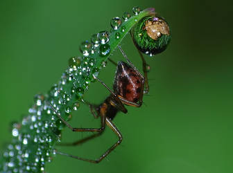 Spider refraction on grass 3 by MonkeymanC3