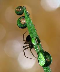 Spider refraction on grass 1 by MonkeymanC3