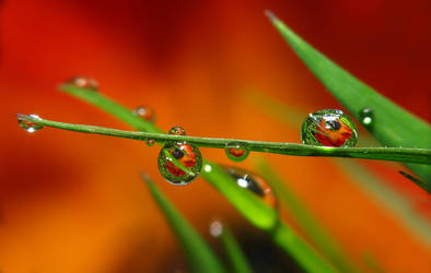 Water Drop Refraction - Today by MonkeymanC3