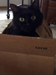 the cat in the box by Eliseimo52