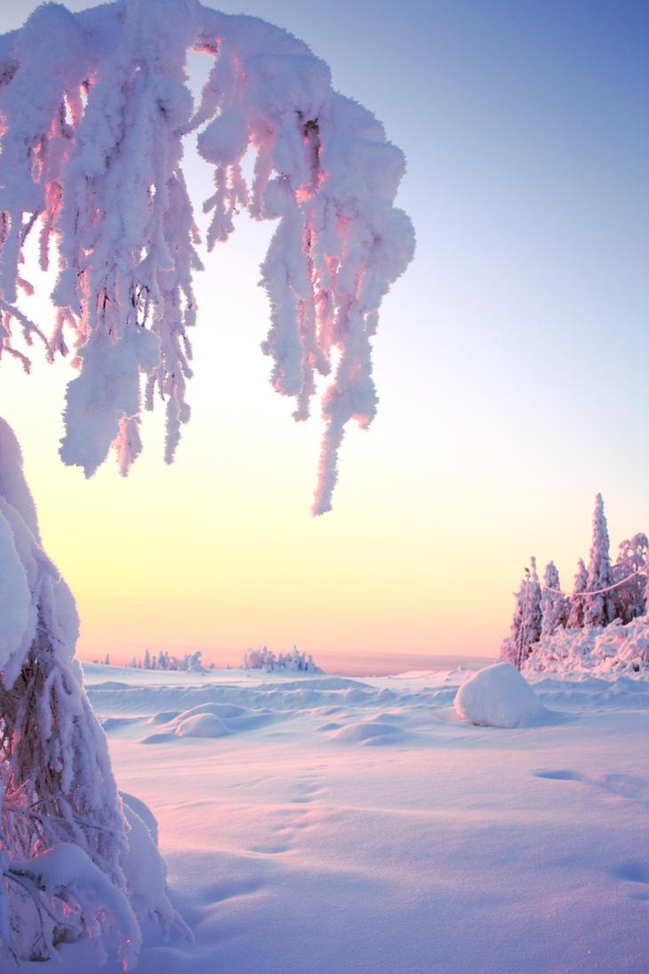 Beautiful Winter Nature Wallpaper