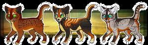 Kitten trio (CLOSED - auction)