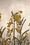 vintage flowers by beatriiz