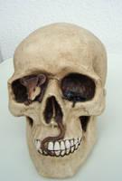 Skull I by FelidaesStock