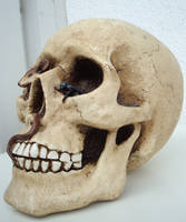 Skull II by FelidaesStock