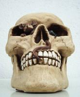 Skull III by FelidaesStock