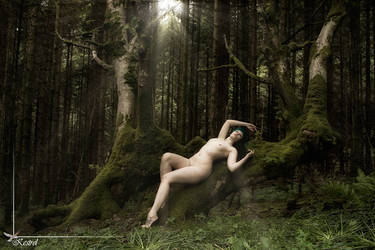 Tree2 by SarahInTortureland