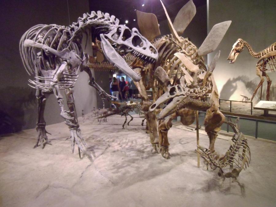 http://img00.deviantart.net/8a78/i/2012/214/e/e/allosaurus_v_s__stegosaurus_by_irohspinyfan-d59jmxz.jpg