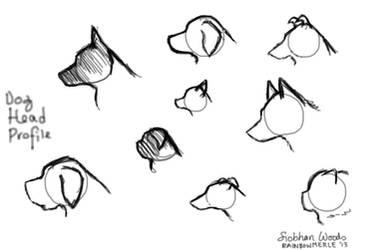 Dog Head Profiles