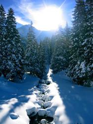 Winter sun by torico