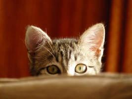 I see you... by predARTor