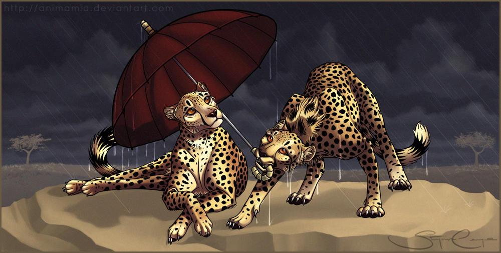 Savannah Rain