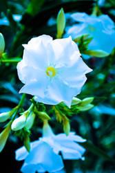 Flower by karlitos-nightmare