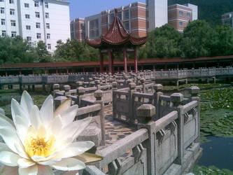 my school nanjing JK college by sjzheng