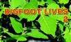 Bigfoot Lives 2 Stamp by Black-Battlecat