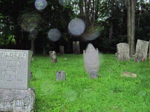 Evans Rd Cemetery 13
