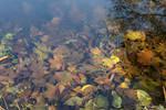 Autumn in Pokrovskoye-Streshnevo