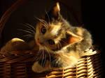 kitty on potatoes