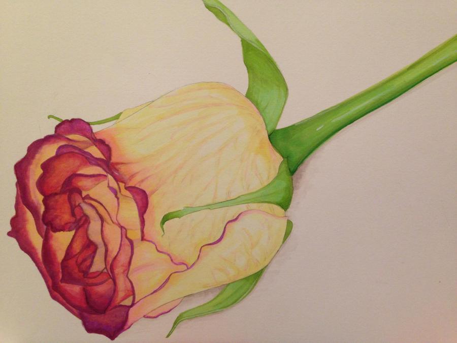 Rose by Dynamisa