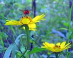 Orange Fly-Bee