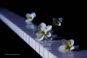 A sweet melody