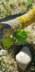 plant...