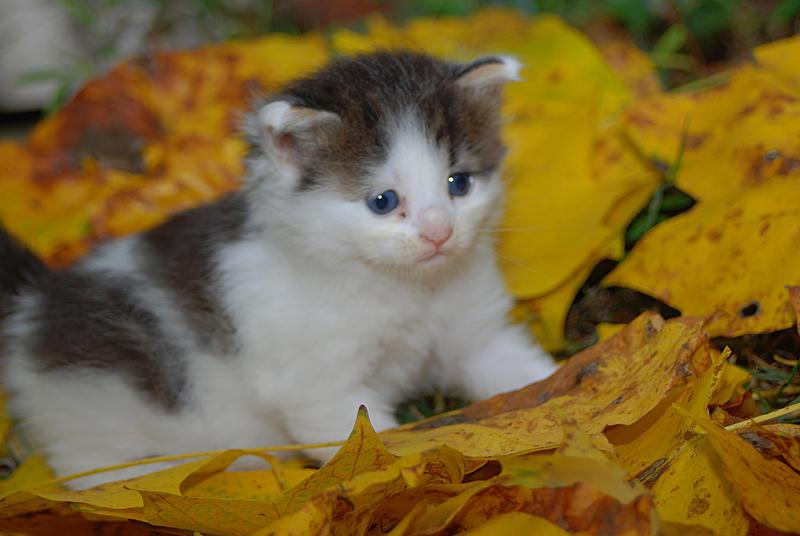 An Autumn Kitten by martintinaz