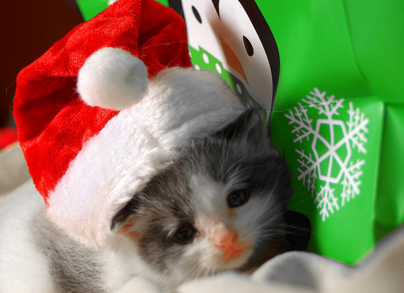 Santa Kitty by martintinaz