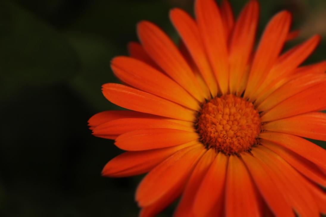 It was orange by ZitiGotMeLoseControl