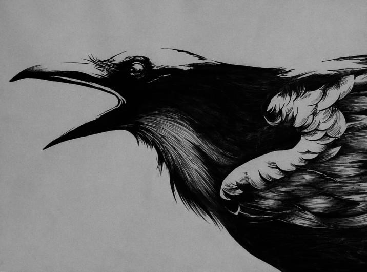 ink_art__crow__by_kpinedo-d5dhfo2.jpg