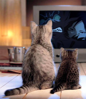 Cat Loves Kekkaishi