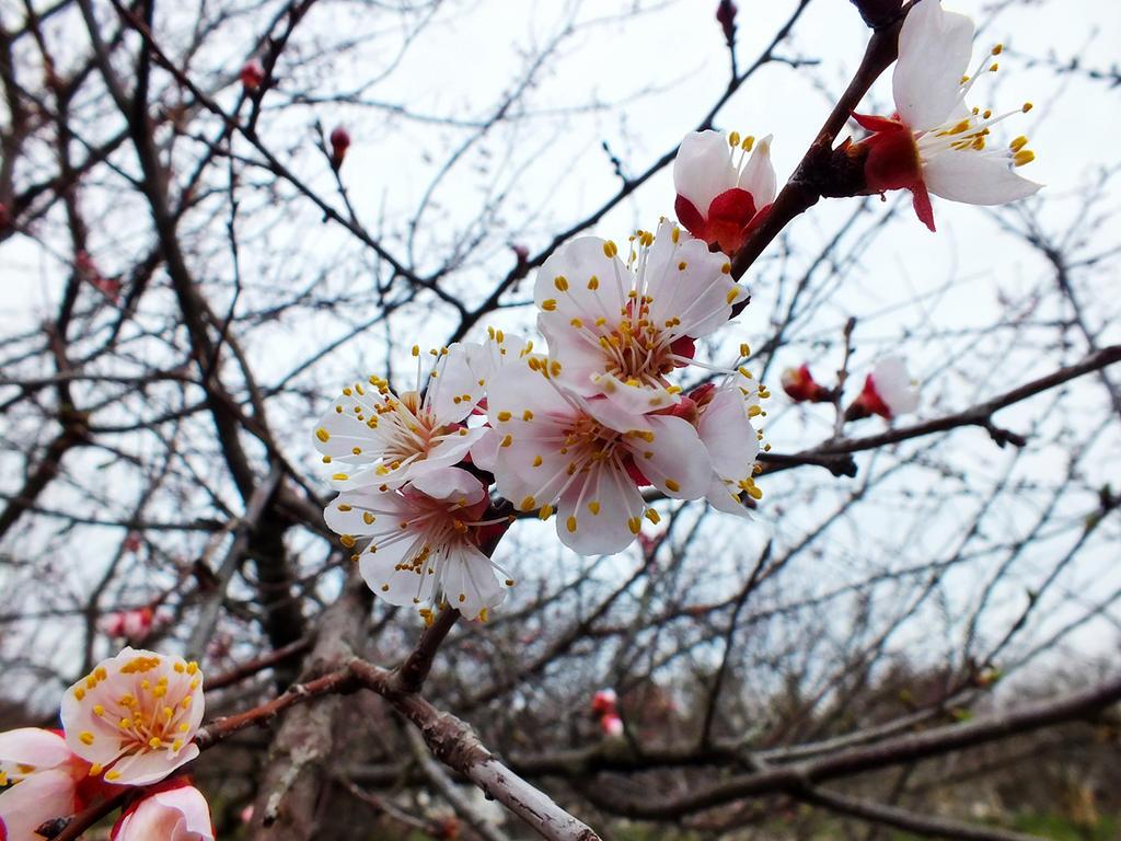 springtime (3)