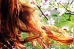 Redhead Spring