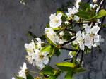 springtime (4)
