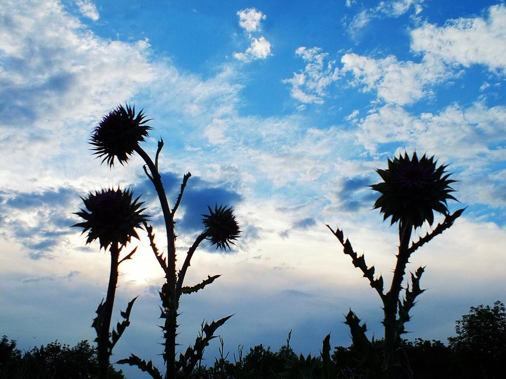 sky (2)