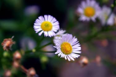 same flowers