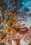 Trees by cristineny